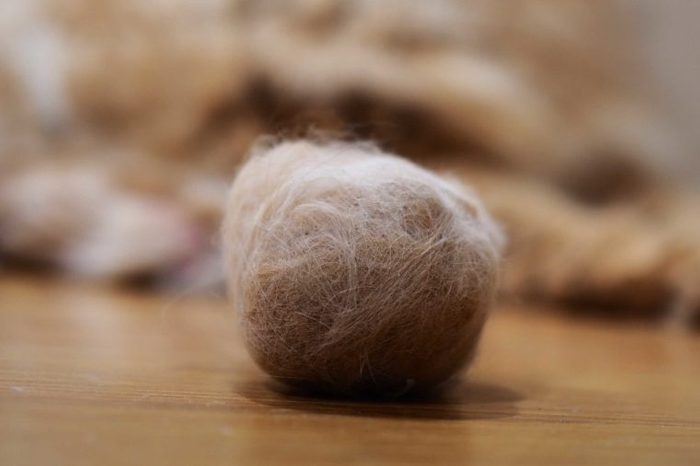 Hairballs in cats. Hairballs occur as a result of your cat grooming and swallowing hair.
