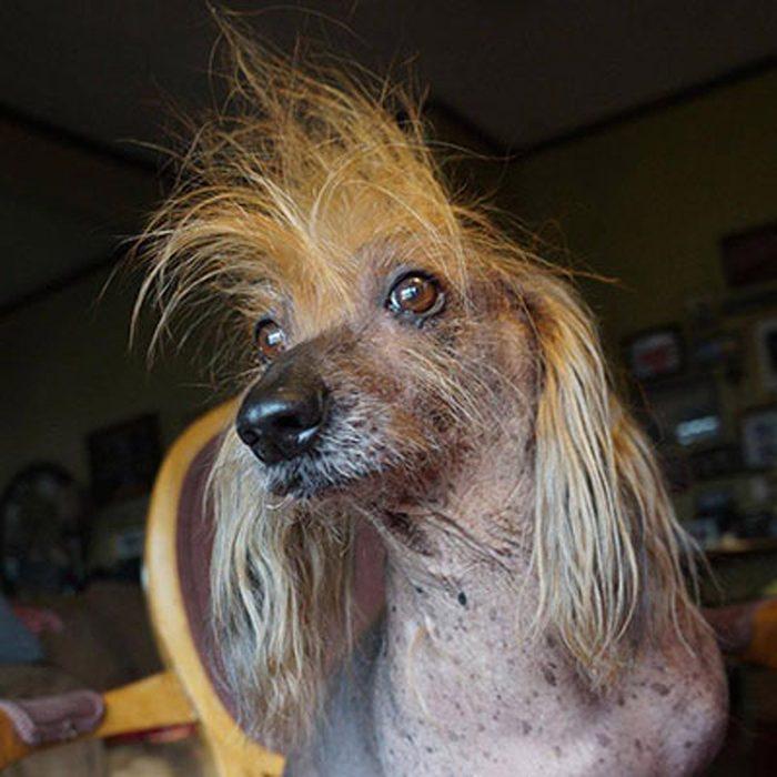 ugly dog isaboo