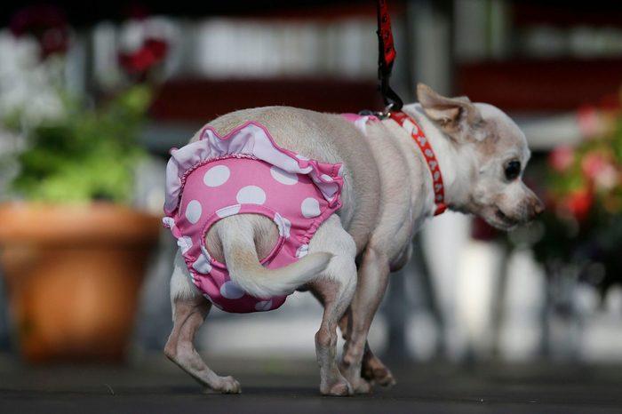 ugly dog precious