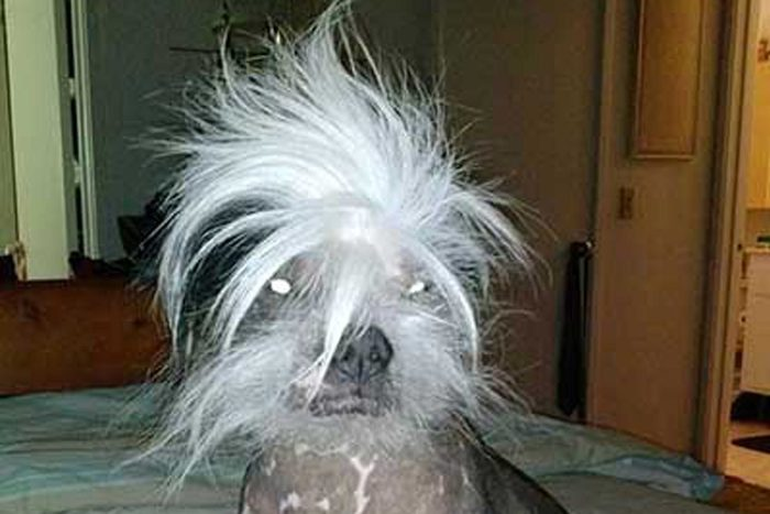 ugly dog zoomer