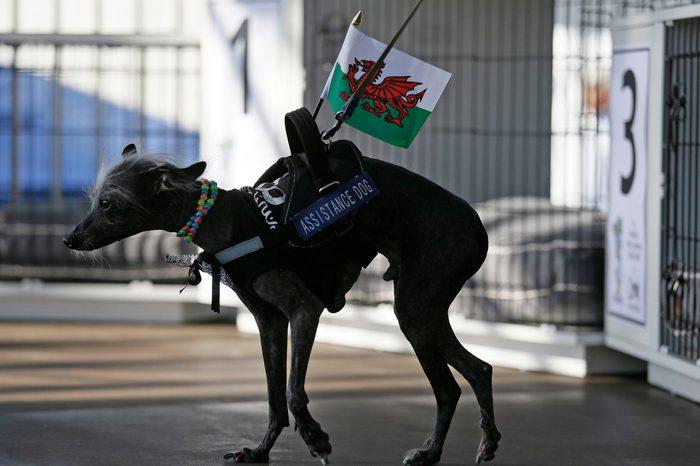 ugly dog chase