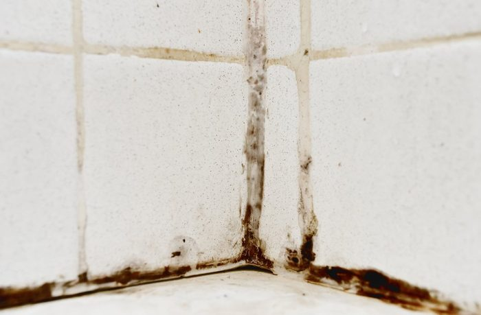 Black mold growing on shower tiles in bathroom