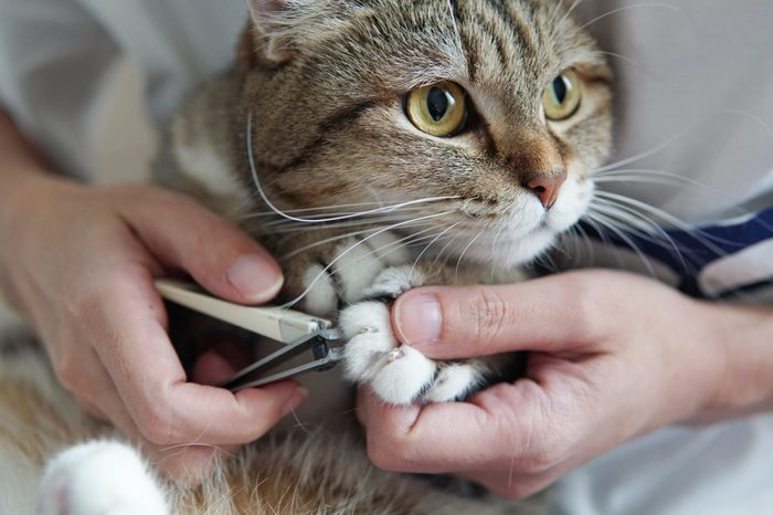 owner's hand holding clippers nail and cat's paw.Trimming cat's nails.