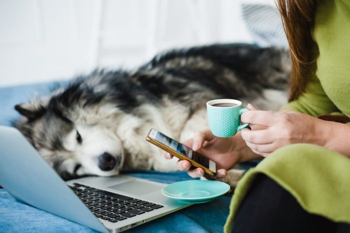A woman with long hair sits with a cup of coffee and uses the application on the phone. Next to her is a laptop, and in the background is a large Malamute dog.