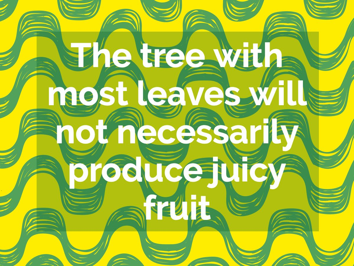 Brazilian proverb