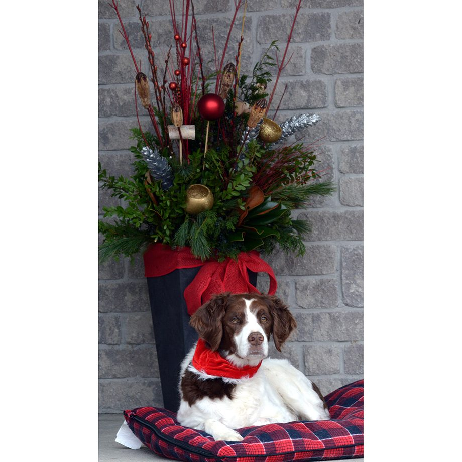 Deck the halls - holiday outdoor planter and dog