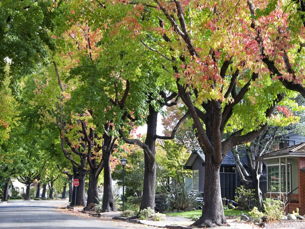 Residential street with many trees