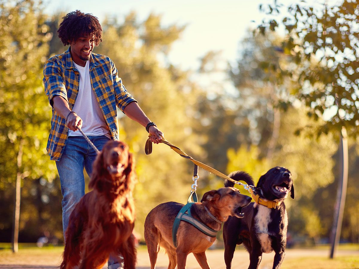 Walking 10,000 steps a day - walking dogs