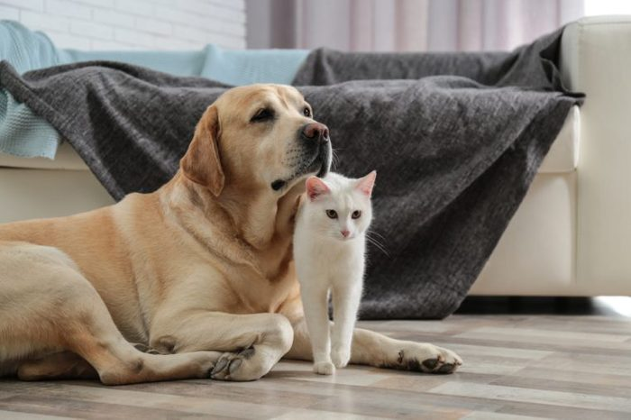 Adorable dog and cat together on floor indoors. Friends forever