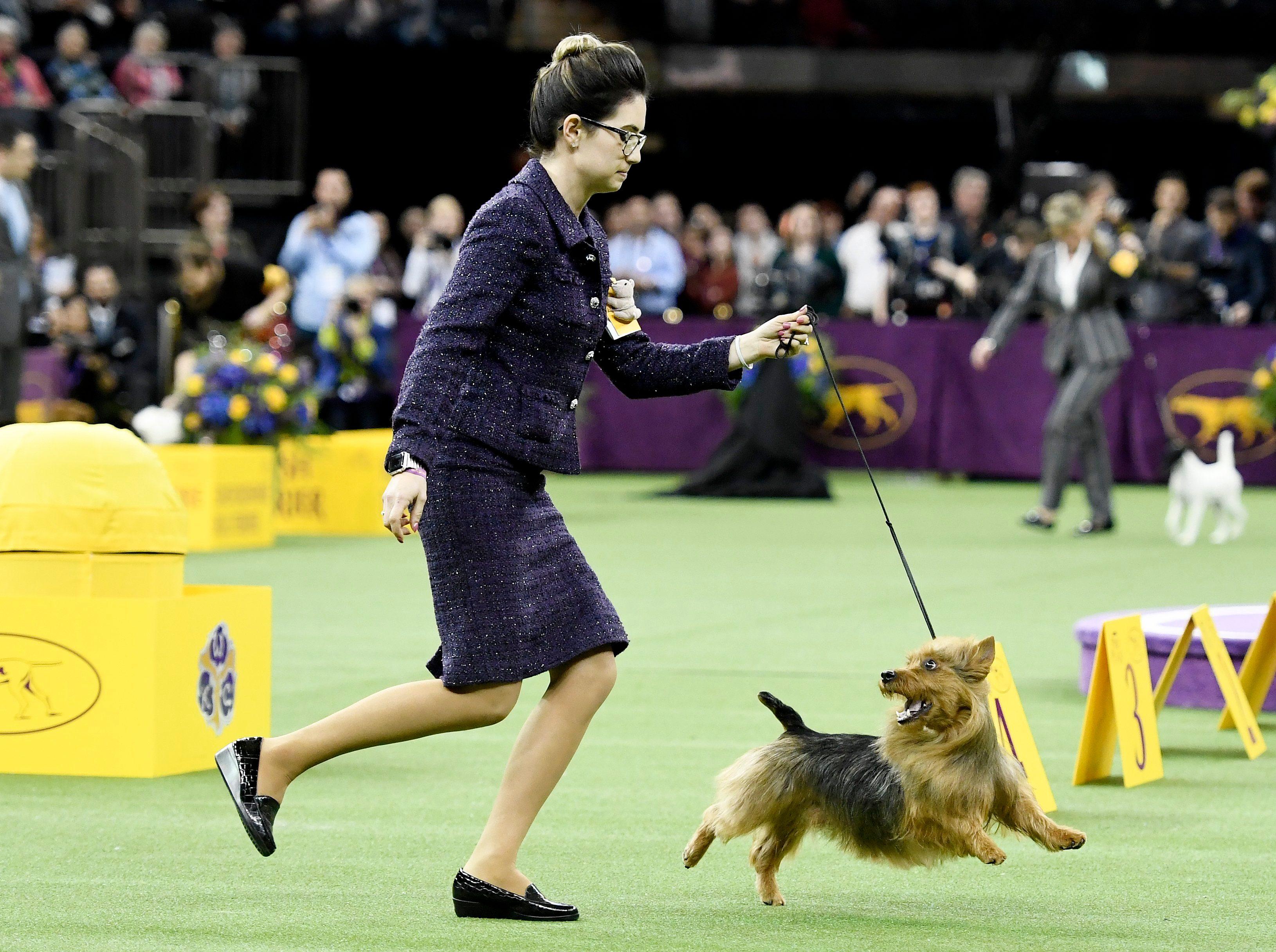 west minster dog show