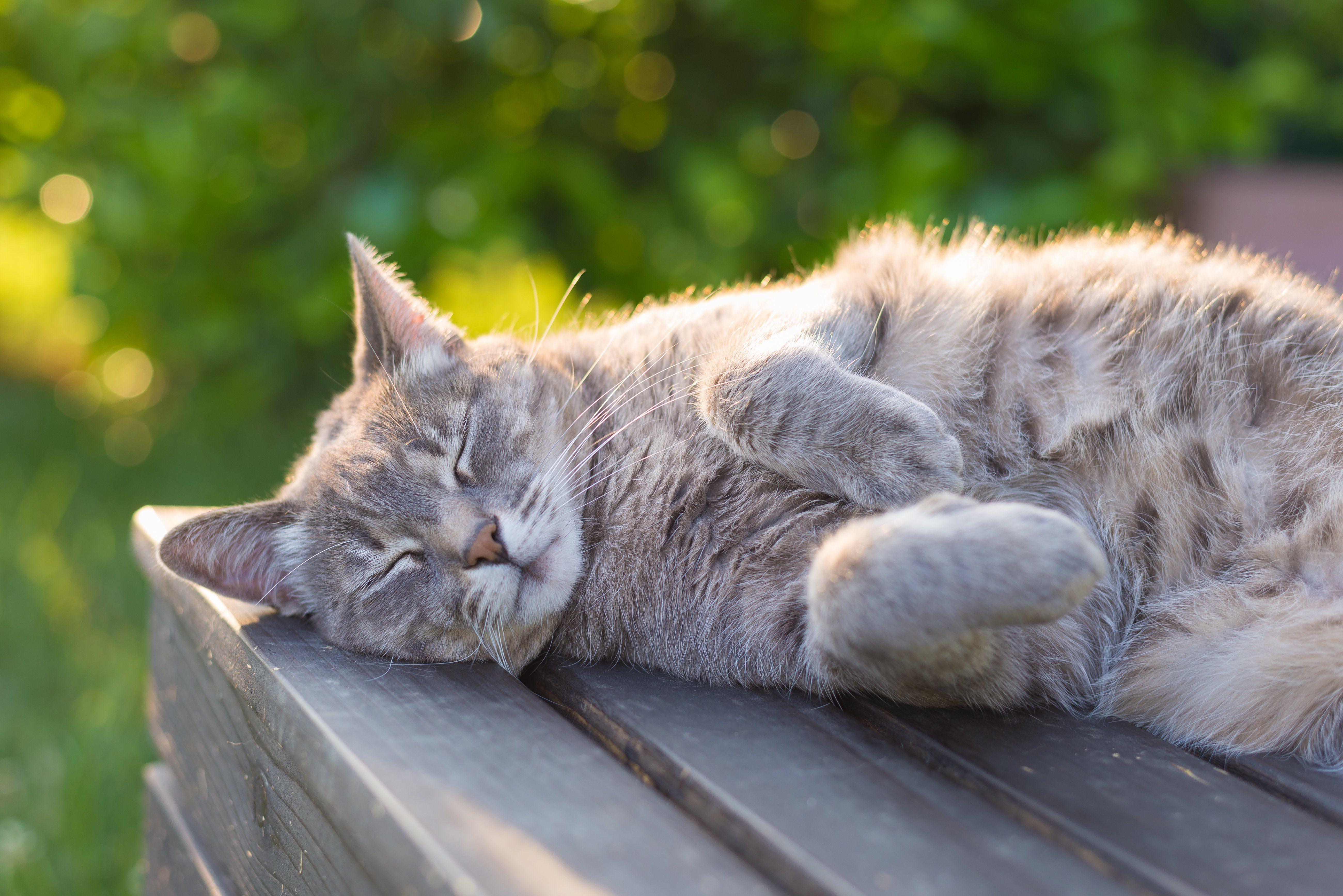 cat sleeping in the sun