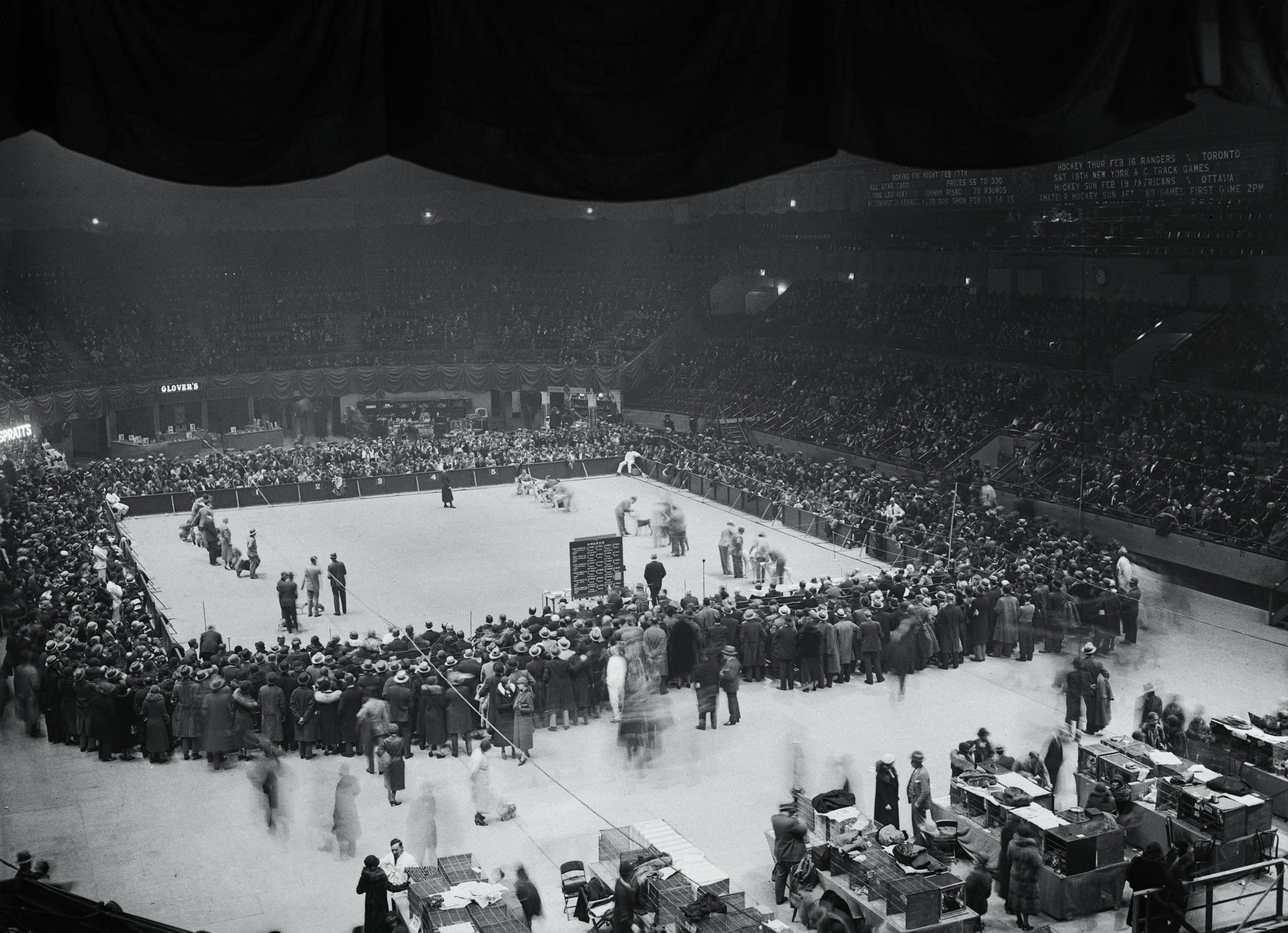Westminster dog show 1933