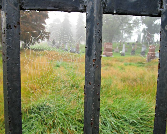 A cemetery seen through a spider web
