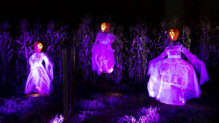 Three scarecrows in dresses bathed in purple light