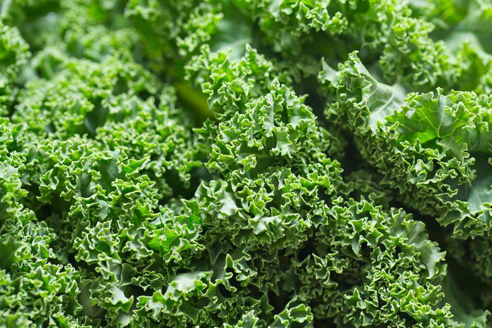 fresh kale close up