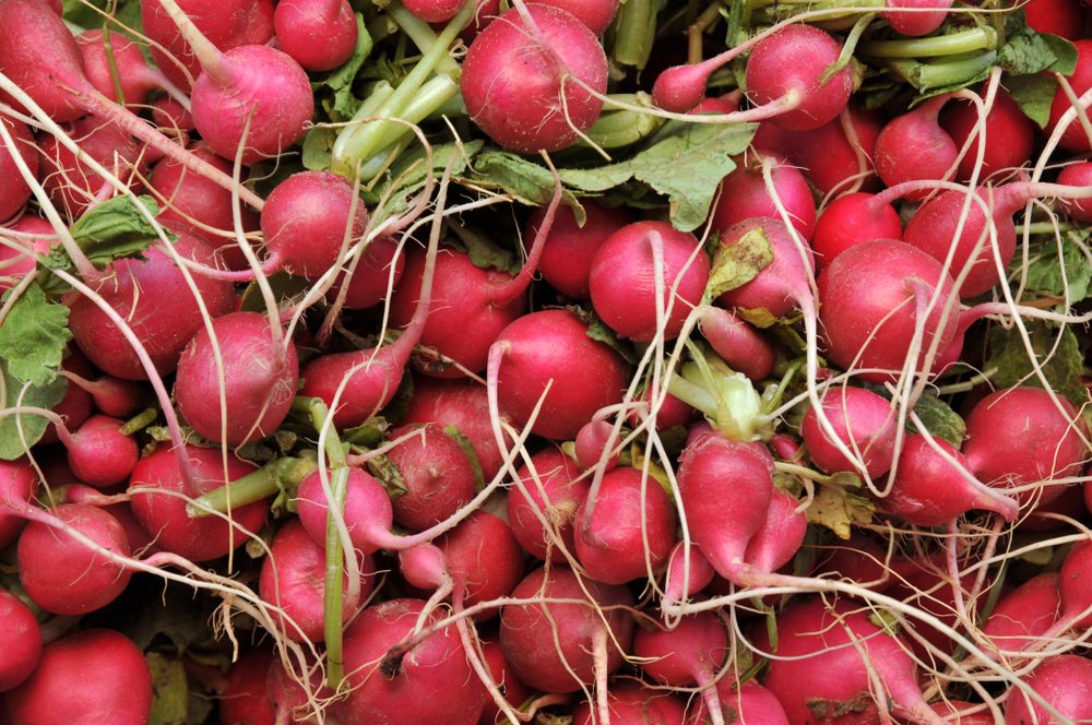 Close up on bunch of fresh radishes in the market