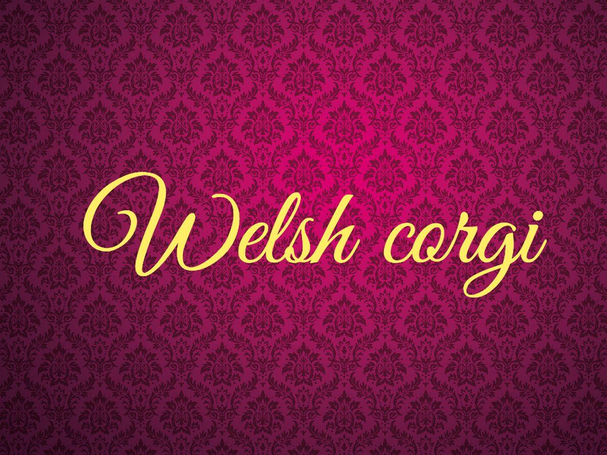 Welsh corgi - royal terms