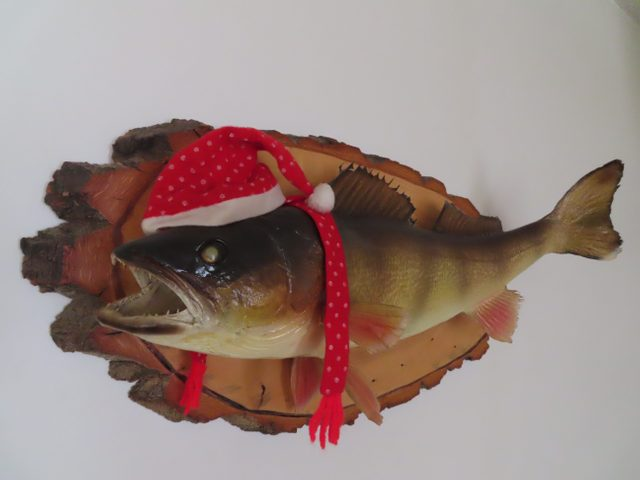 Fish mounted on wall wearing Santa hat and scarf