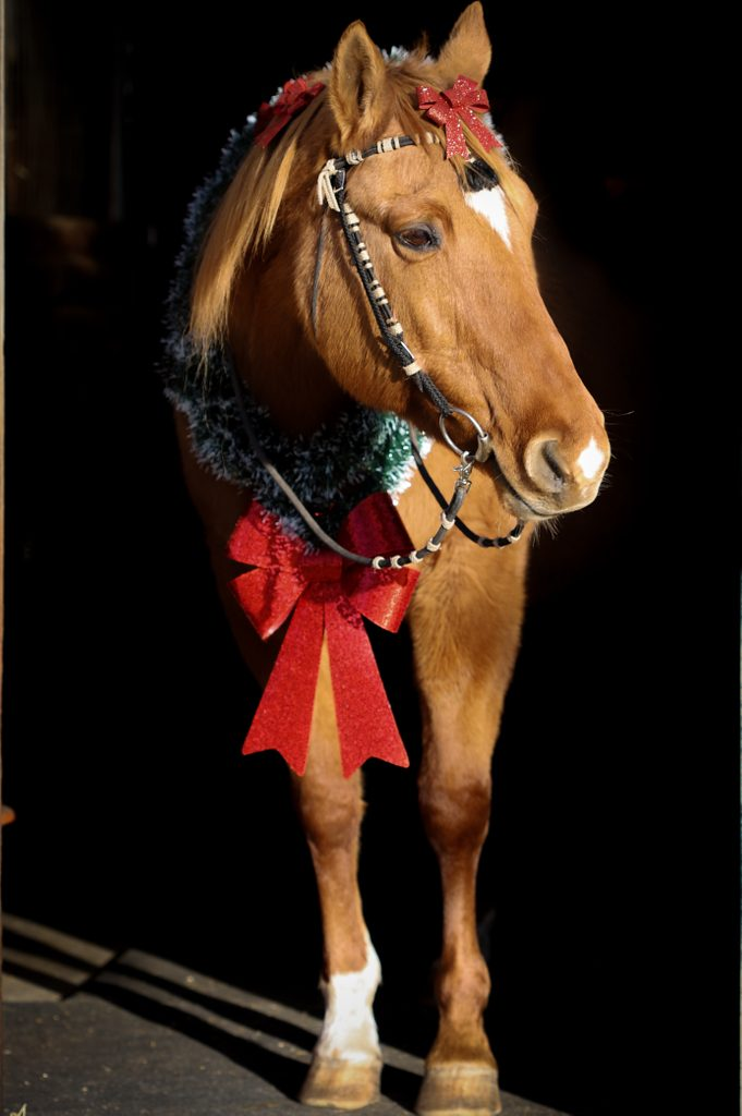 A horse with a red bow around its neck
