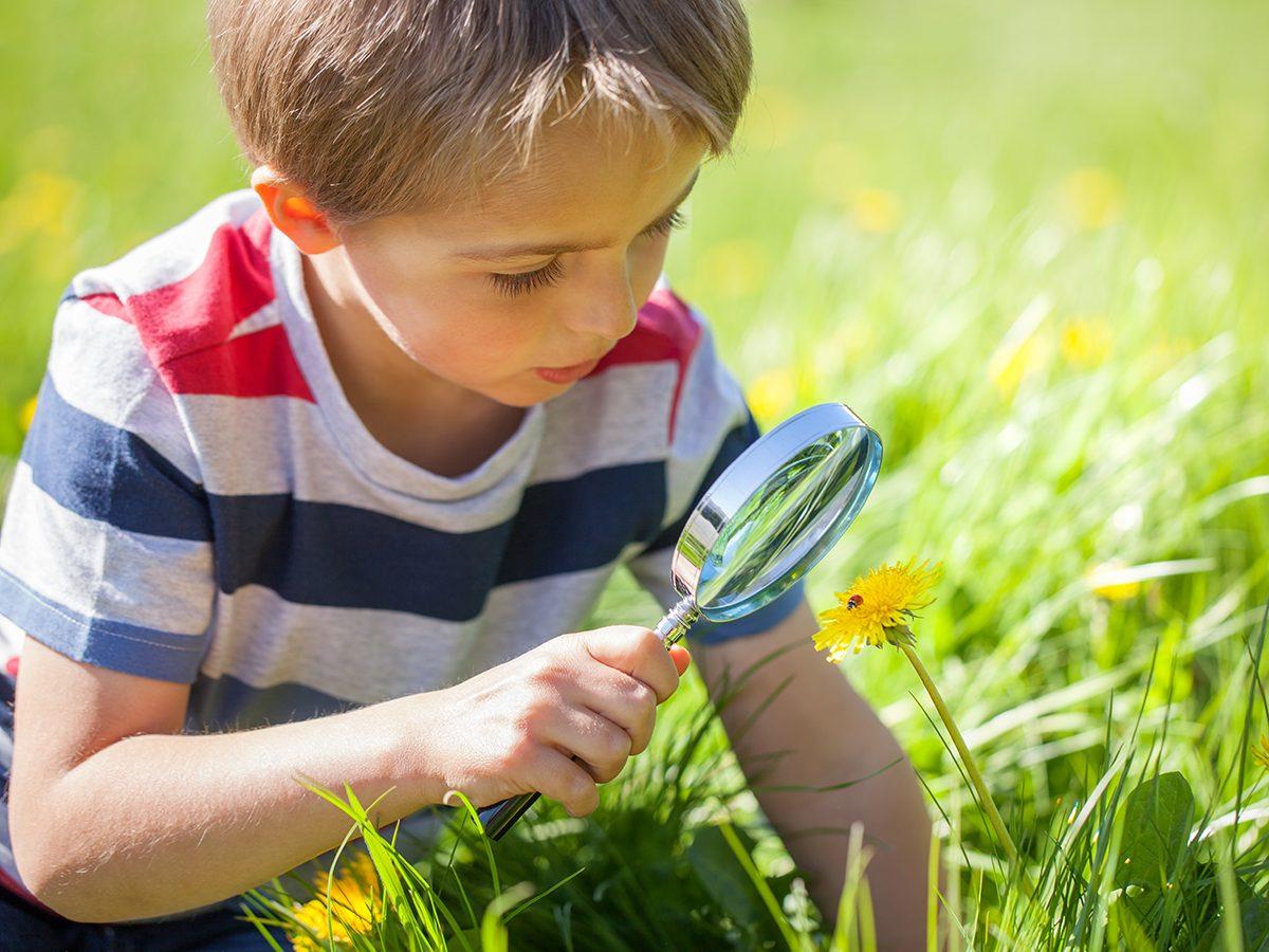 Funniest Readers Digest Jokes - Young Boy Inspecting Dandelion