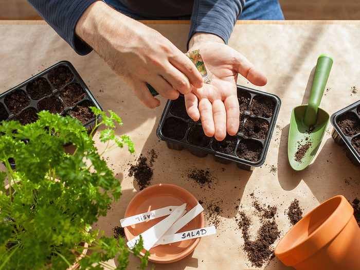 gardening, planting at home. man sowing seeds in germination box