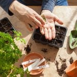 10 Vegetables You Should Start Indoors