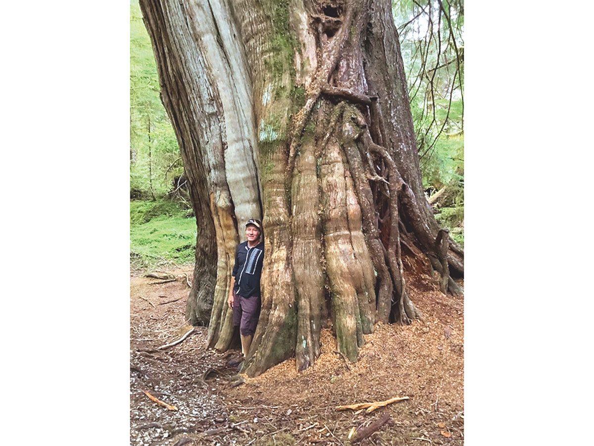 Brett being dwarfed by a massive tree trunk