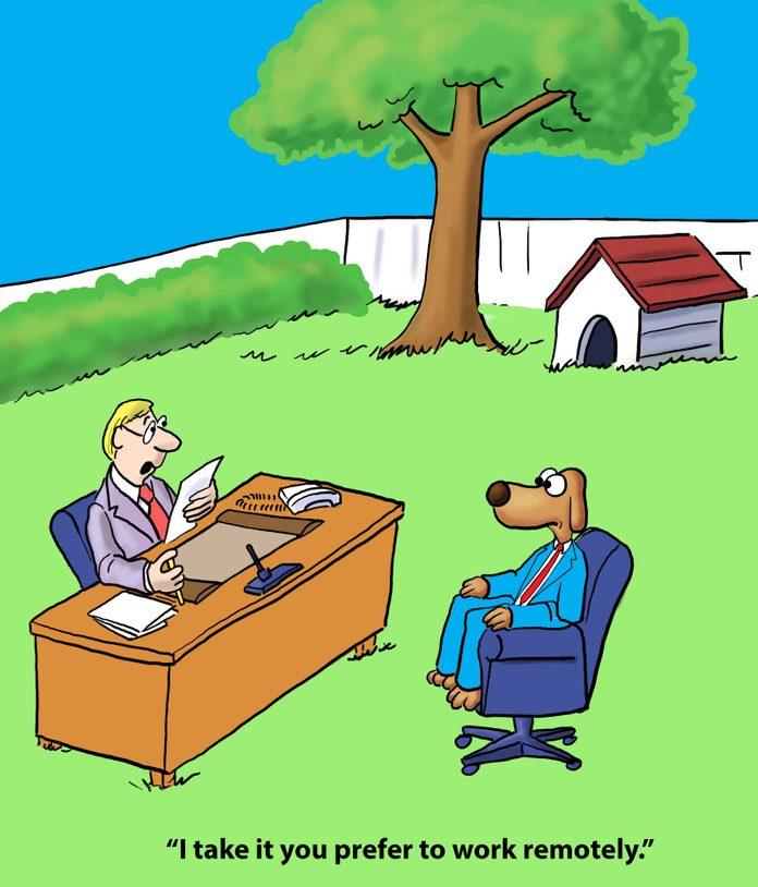 Dog prefers to work remotely