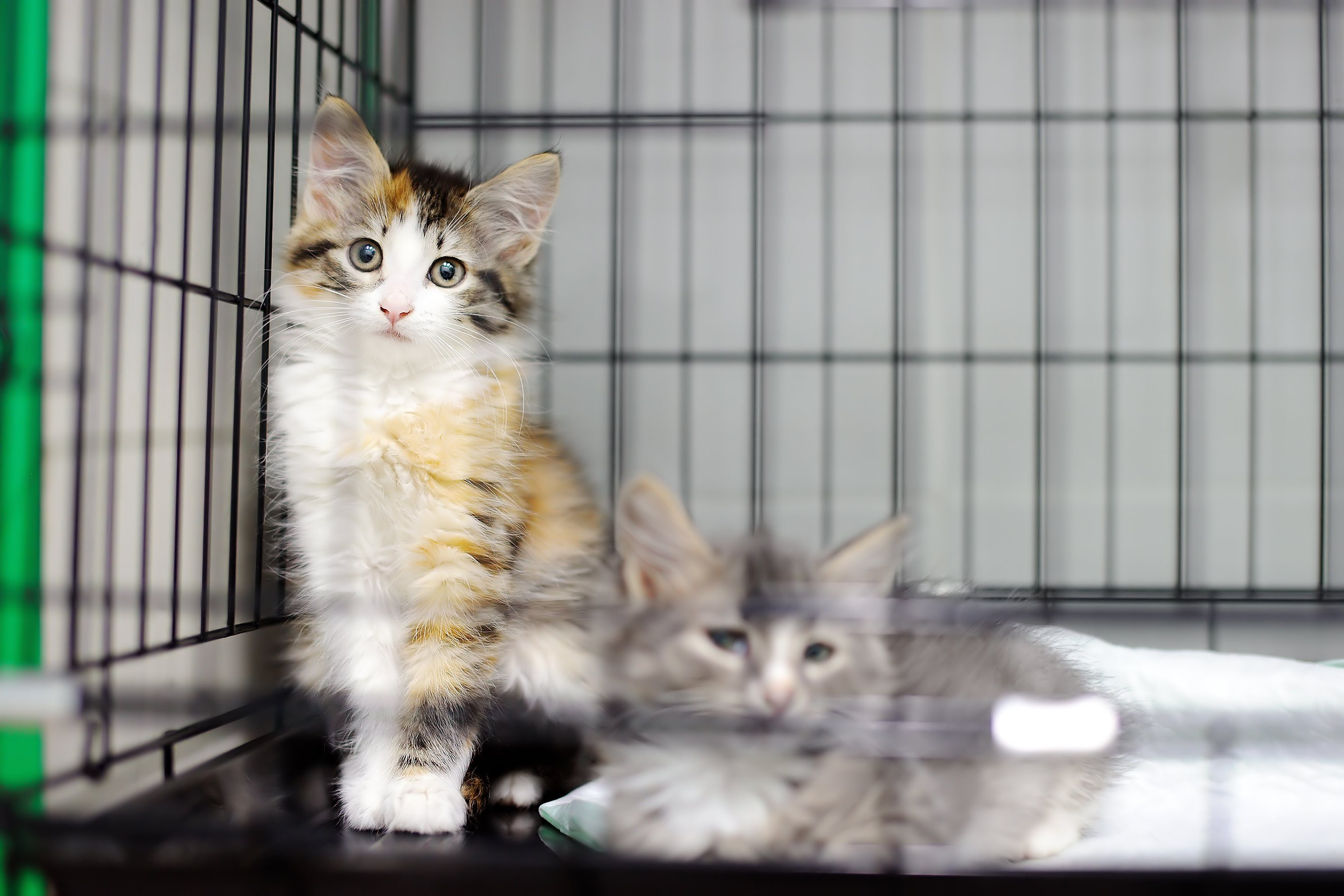 Two kittens in a cage in an animal shelter