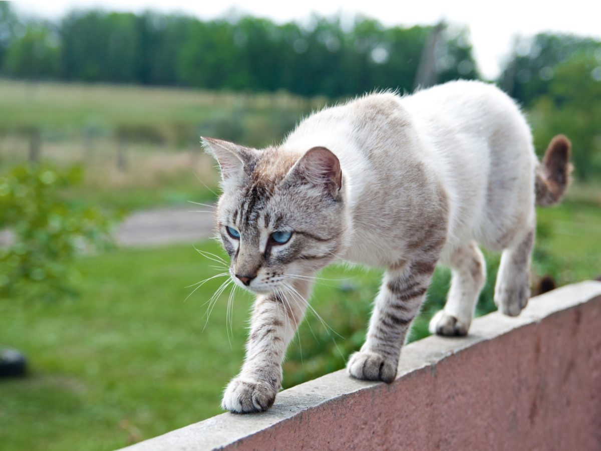 Cat walking on ledge of home