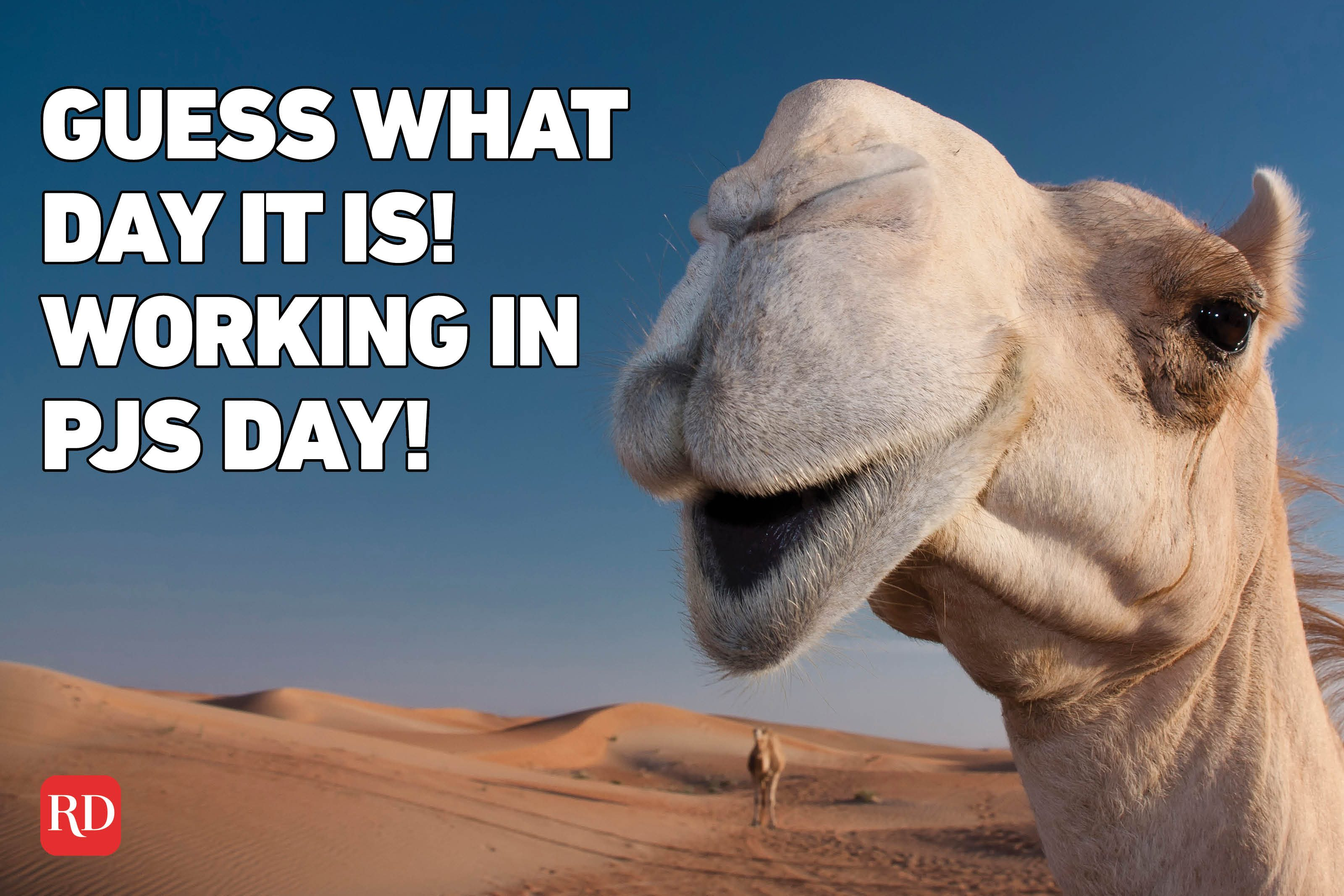 Meme text over image of a camel