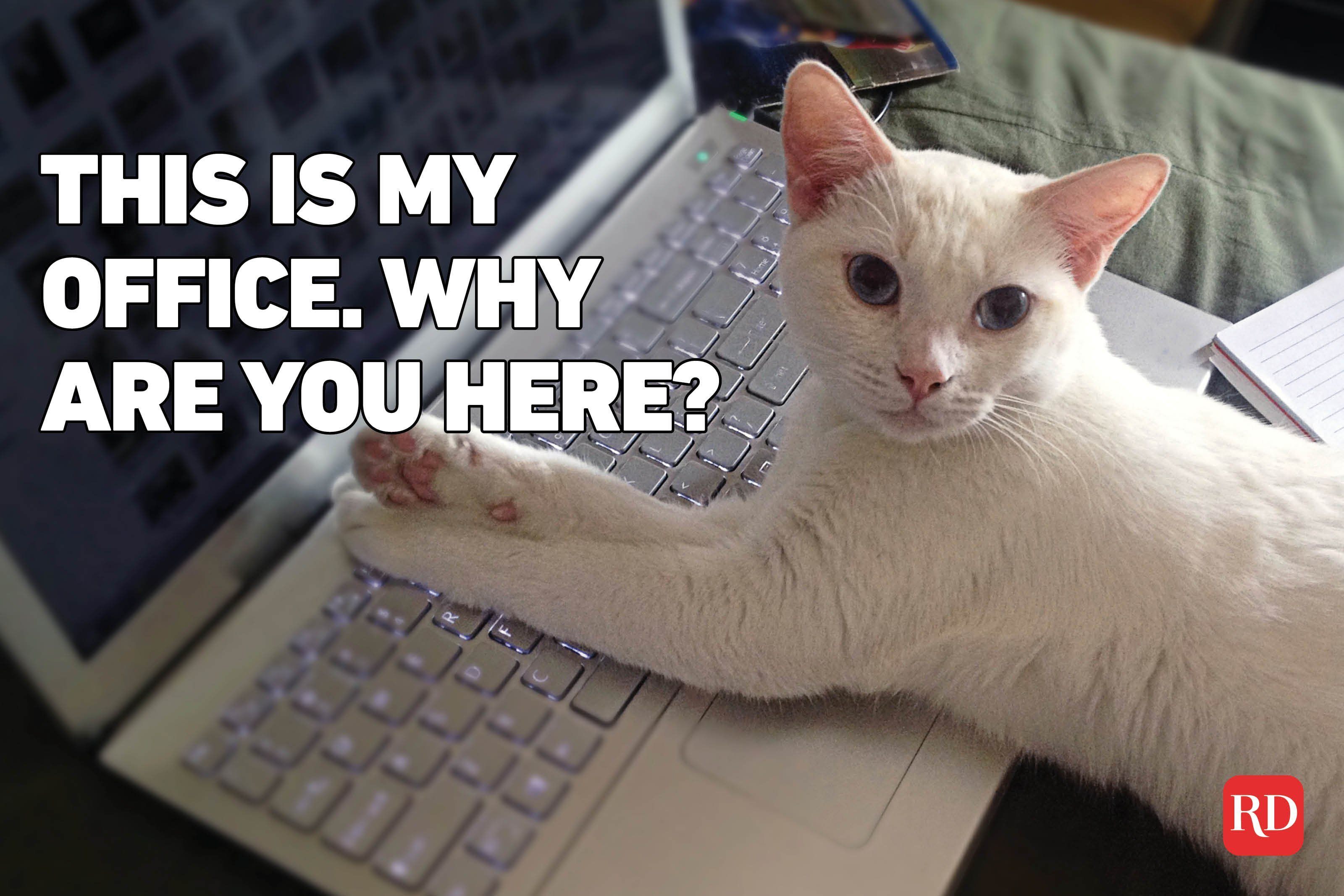 Meme text over image of cat on laptop