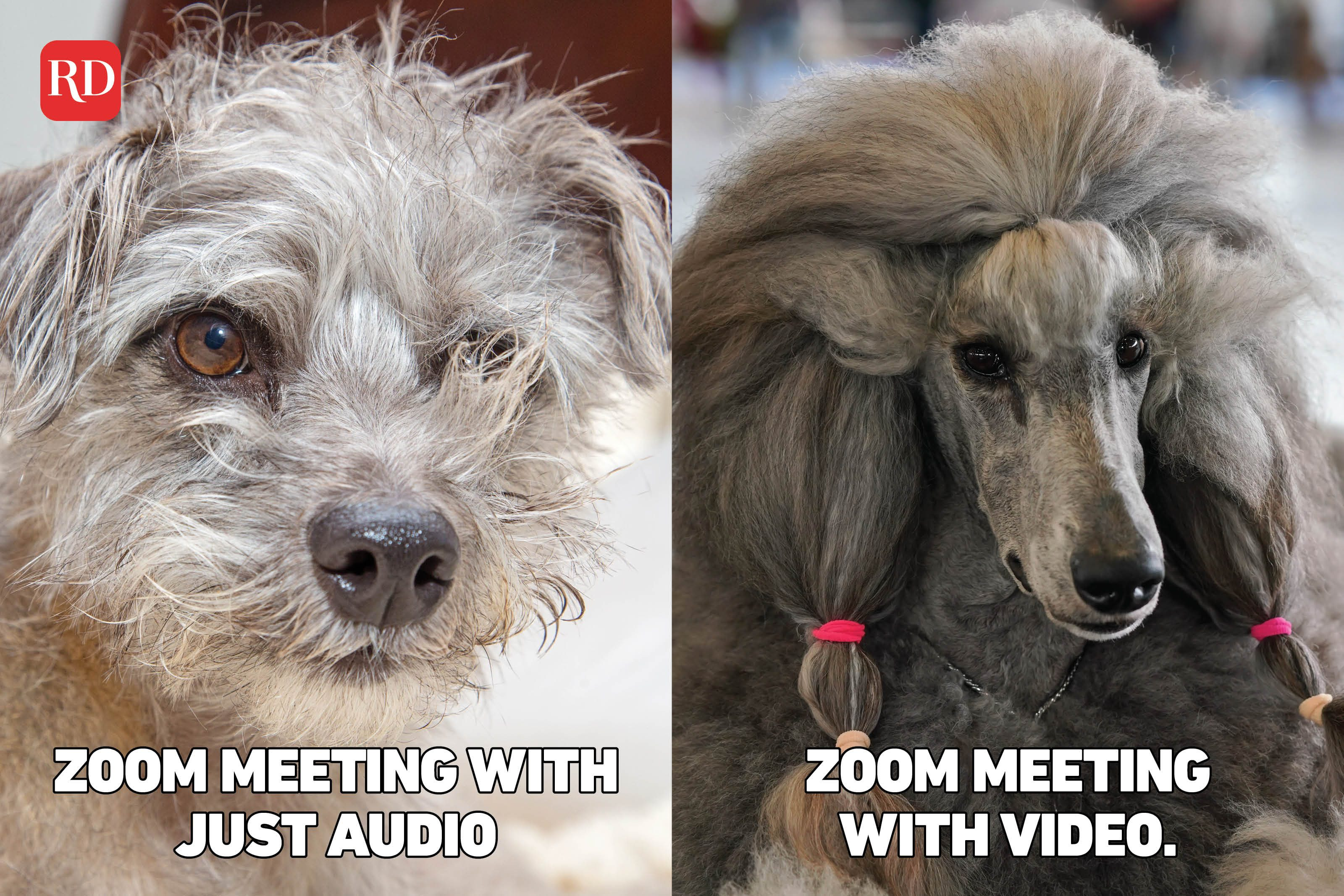 Two images with meme text over images of dogs