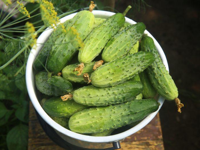 Growing cucumbers in garden