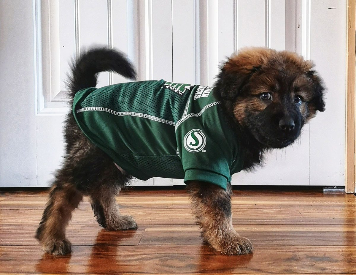 Dog wearing Saskatchewan Roughriders jersey