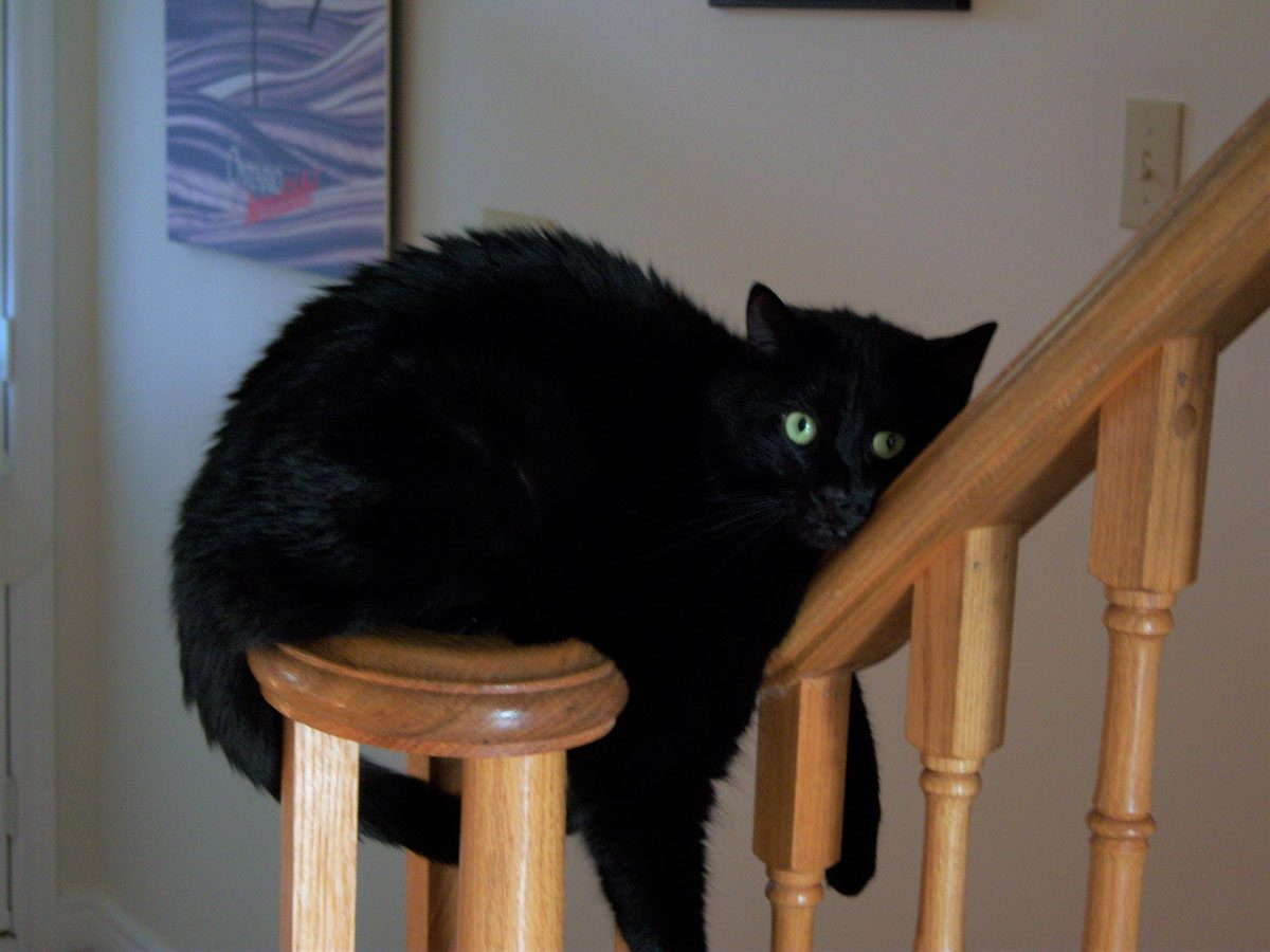 Black cat sitting on stair rail