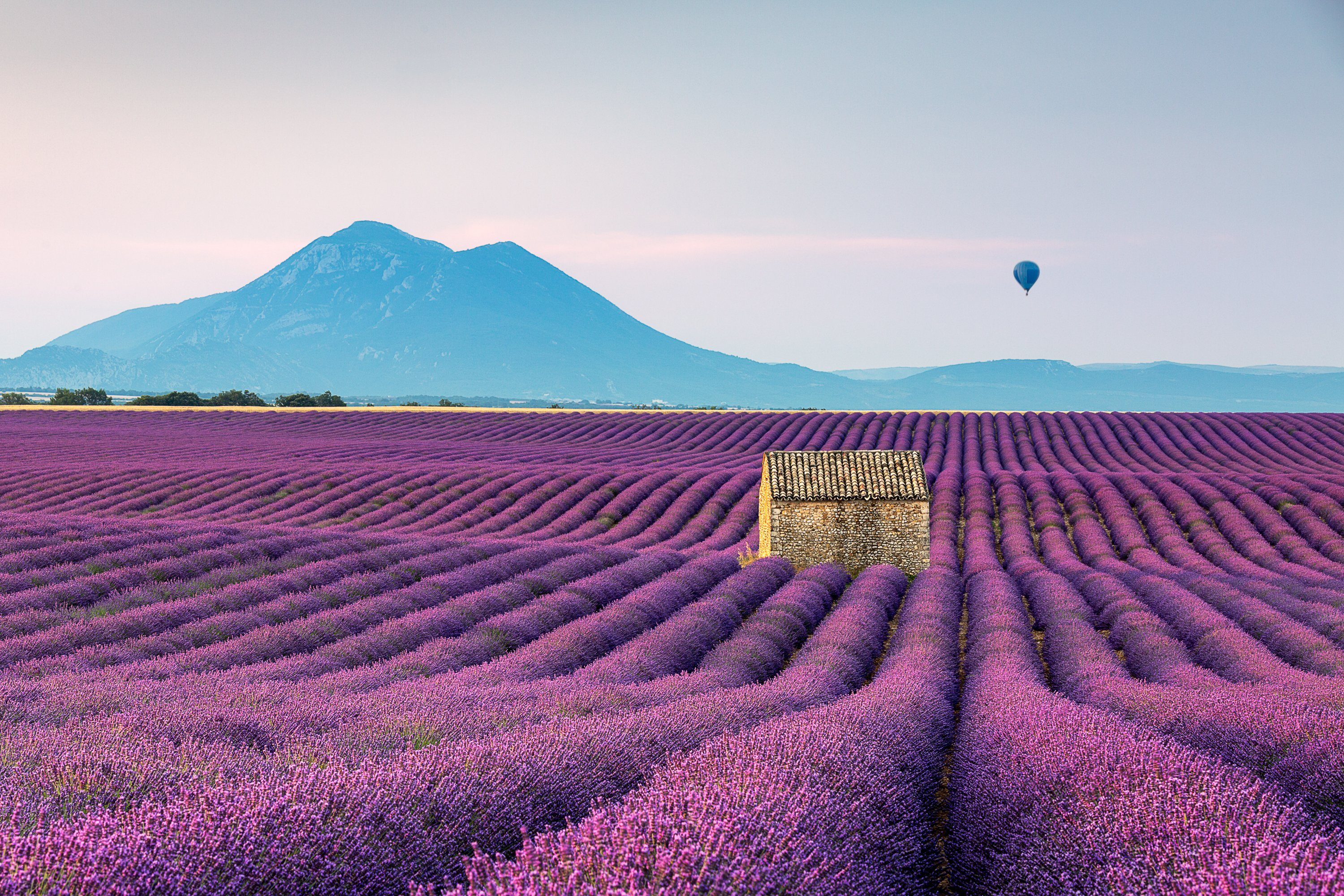 Scenic View Of Lavender Field By Mountains Against Sky