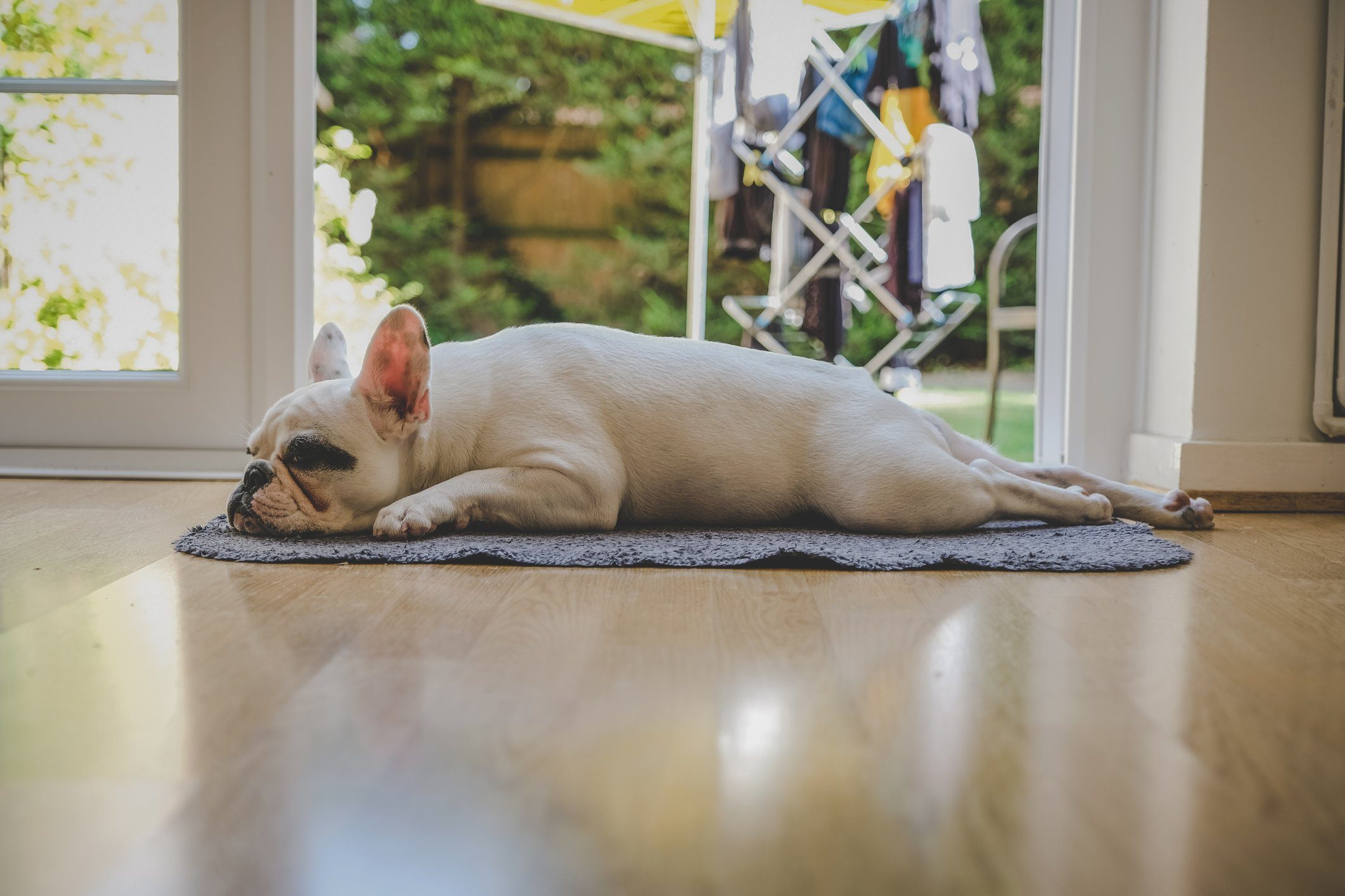 French Bulldog puppy sleeping by the door