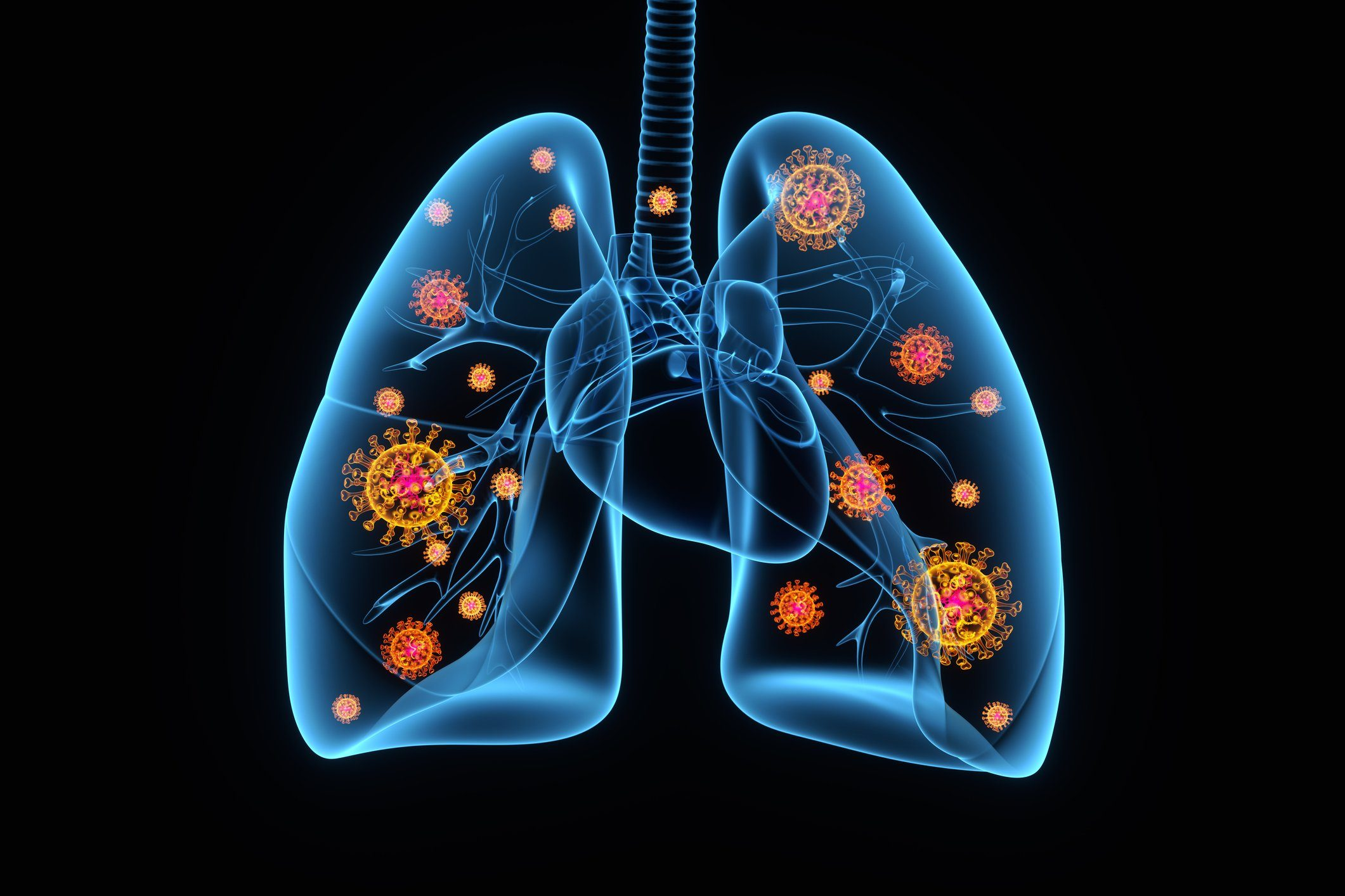 medical 3d rendering of lungs