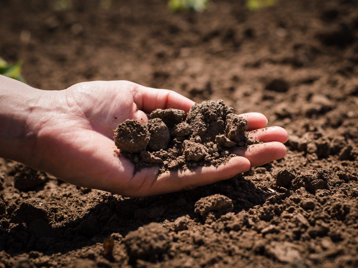 Soil in hands