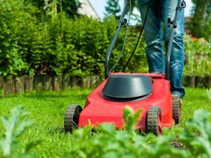 Most efficient way to mow law - Man mowing lawn with red mower