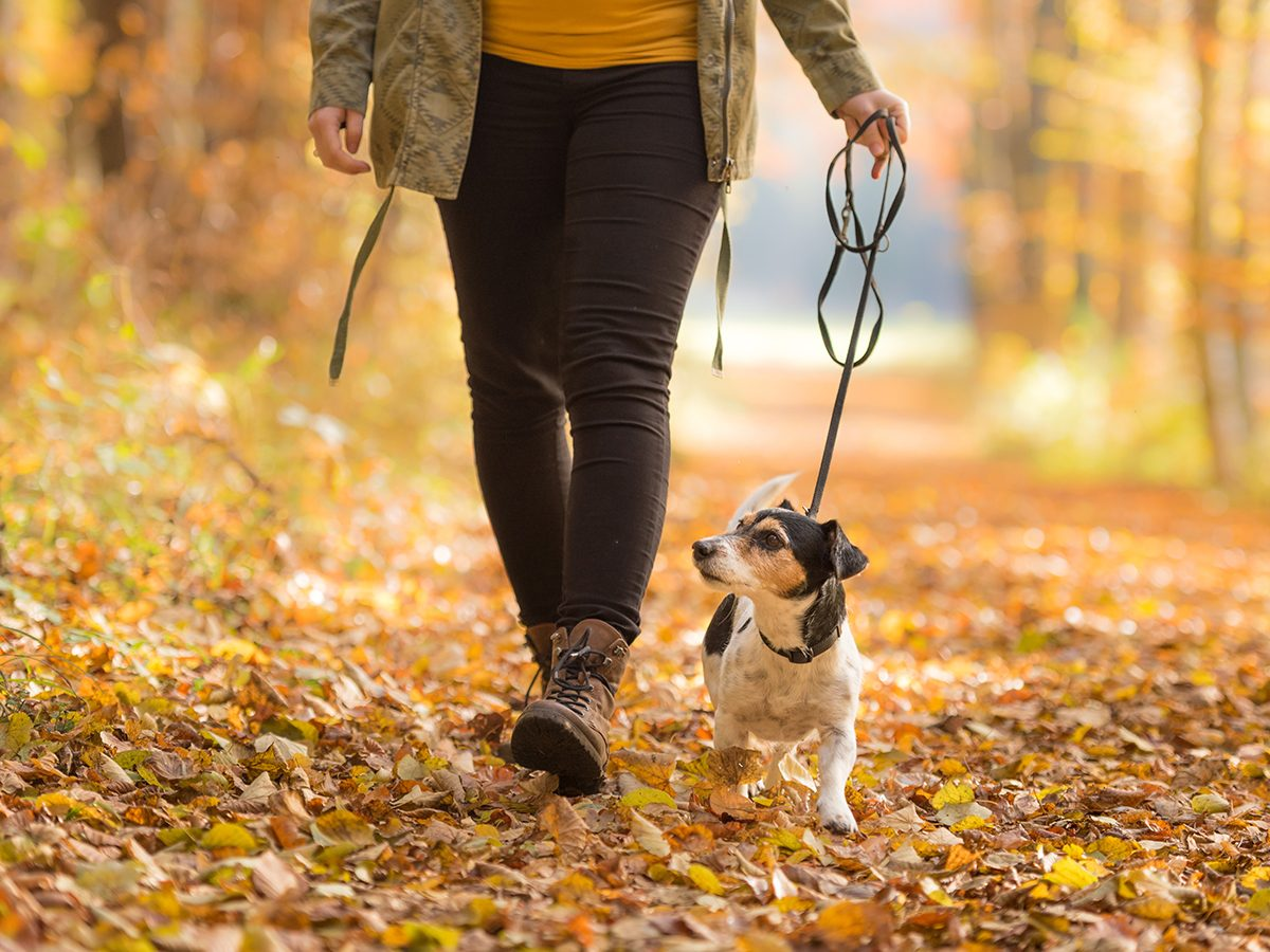 Things that slow down aging - fall walk with dog