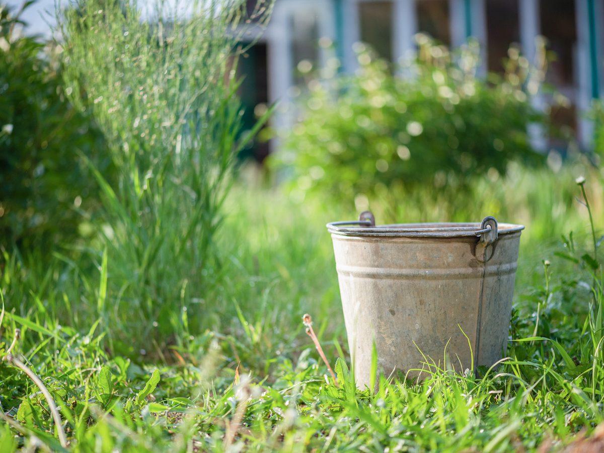 Tin bucket in backyard