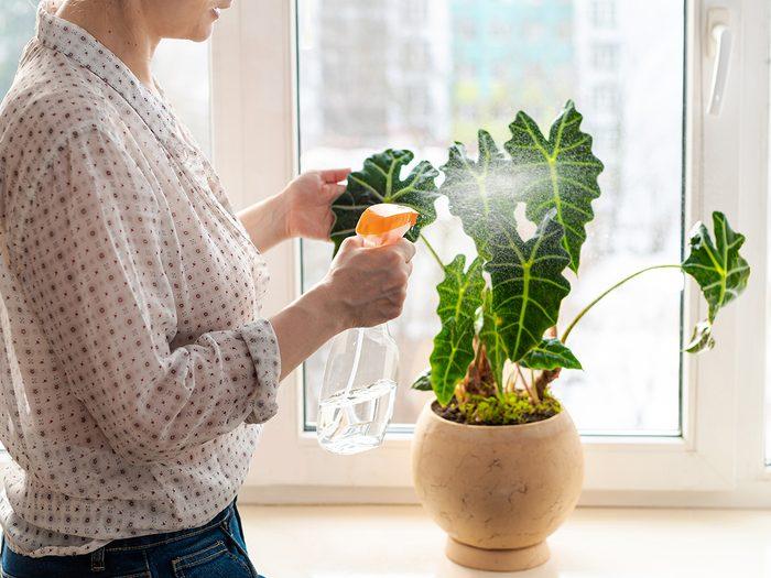 Watering Houseplants