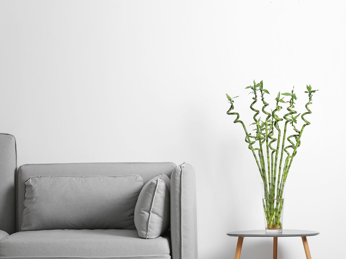 Vase with green bamboo on table near sofa in room
