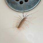 The 10 Most Disgusting House Bugs—and the Best Ways to Get Rid of Them