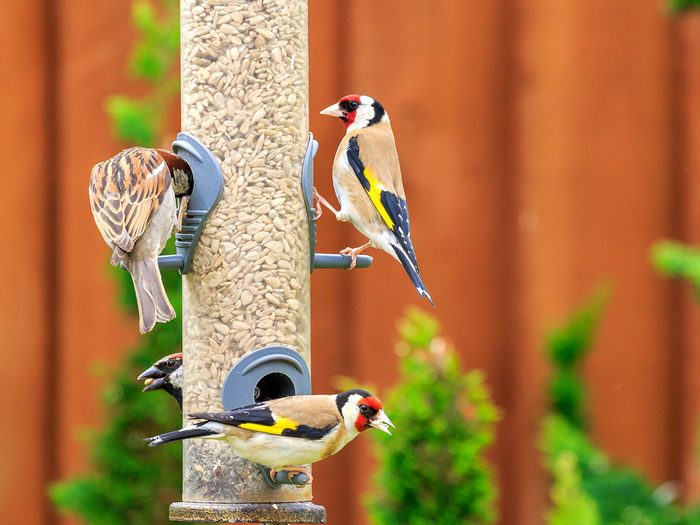 How to boost curb appeal - birds at bird feeder