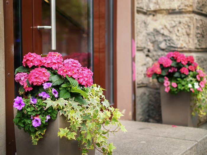 How to boost curb appeal - flowers in pots