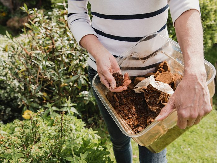 Uses for coffee filters - Unrecognisable woman in casual clothing holding a box of used coffee ground to use as compost in her garden.