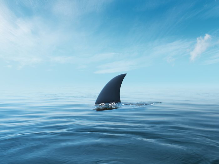 Hilarious tweets - shark fin from Jaws